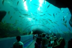 tunelik w Georgia Aquarium