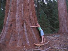 i znowu drzewo