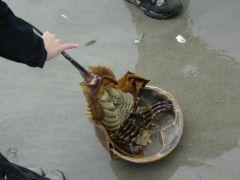 Zwierze wyrzucone z Oceanu po huraganie Ophelia