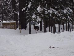Zima w Maine + cos ala sarna :)