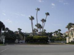 Spore palmy