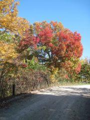 Kolory jesieni w Missouri